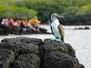 North Central Galápagos (Silver Galapagos)