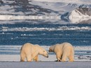 Svalbard in Spring: Polar Bears, Arctic Light & Epic Ice