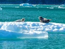 Alaska's Glacier Bay & Island Adventure (Alaskan Dream)