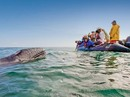 Baja California and the Sea of Cortez