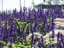 Locks, Legends & Canals: The Saguenay (Grande Mariner)