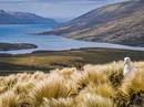 Subantarctic Islands: Birding Down Under 2020