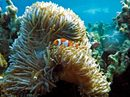 Great Barrier Reef Cruise - South (Coral Expeditions I)