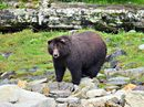 Alaska's Inside Passage & San Juans Cruise (Safari Explorer)