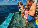 Great Barrier Reef Cruise - North (Coral Expeditions I)