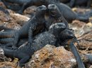 Natural Paradise Galapagos Cruise 4 Days