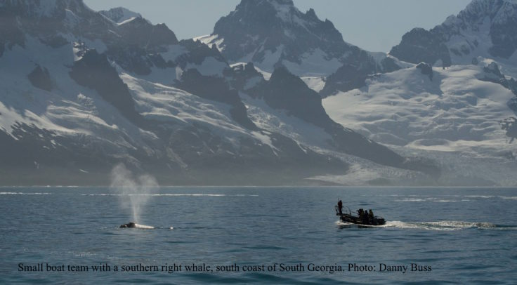 With a right whale off South Georgia - Photo Danny Buss